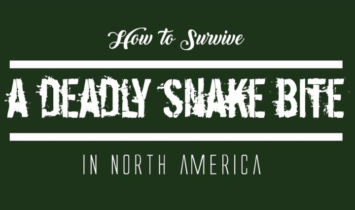 How-to-Servive-a-Deadly-Snake-Bite