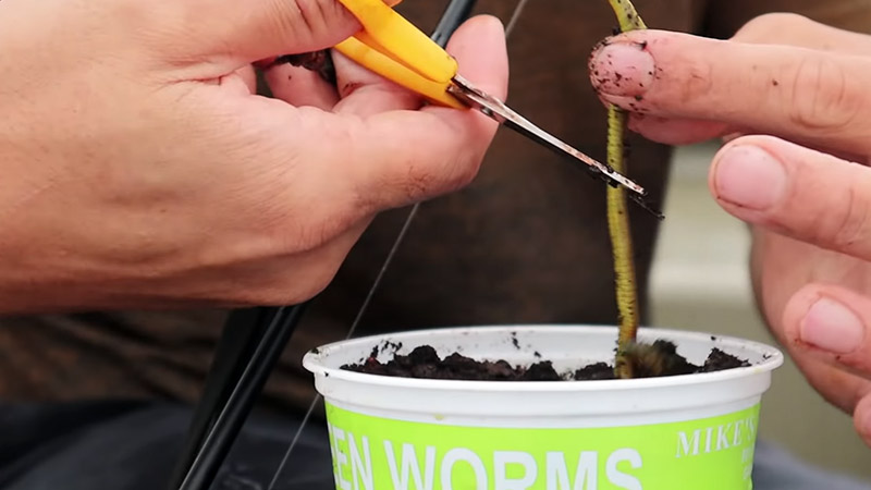 Can You Make Your Own Green Worms