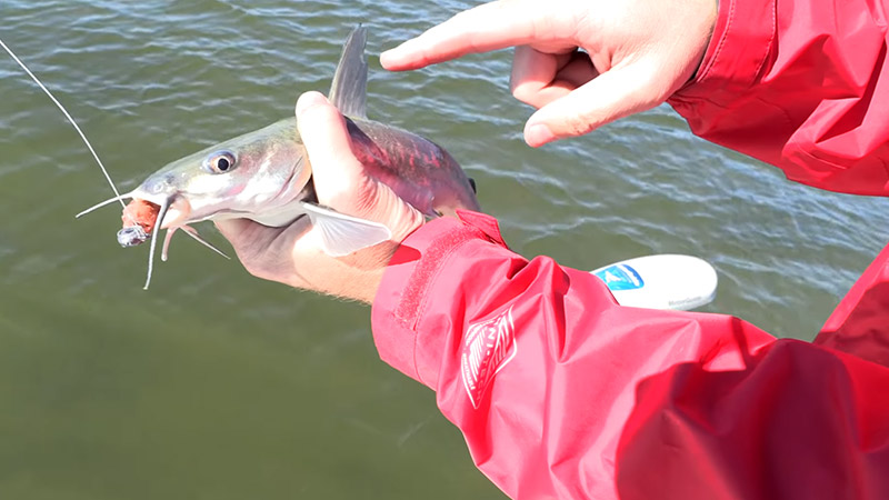 How To Hold A Catfish Properly