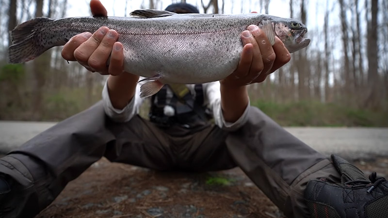 How to Catch Stocked Trout FI