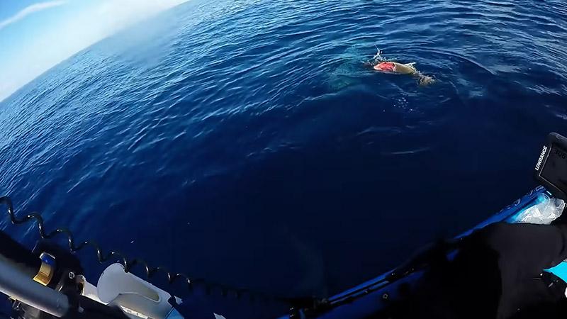 Is It Worth Going Kayak Fishing In The Ocean