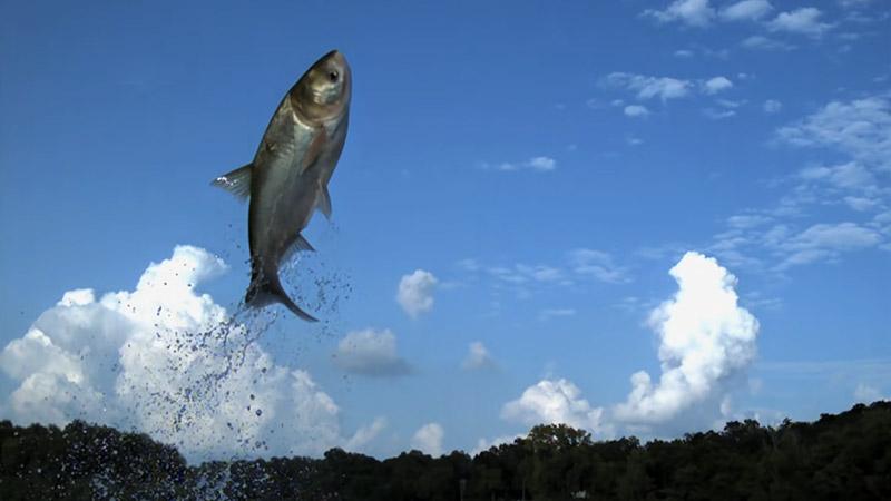 Why Do Fish Jump
