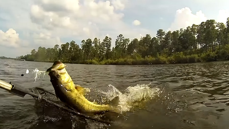 How To Catch Bigger Bass In Ponds