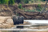 Elephants Crossing at Mapazi. Photo: Jane Addey - Surefoot Safaris