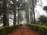 A foggy morning in Araku