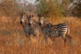 Photo: Jane Addey - Surefoot Safaris