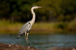 Great opportunities for bird watching, especially water birds.