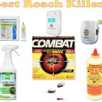 Dealing with Cockroaches: Solution is Using Roach Killer