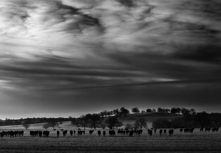 Herd composition
