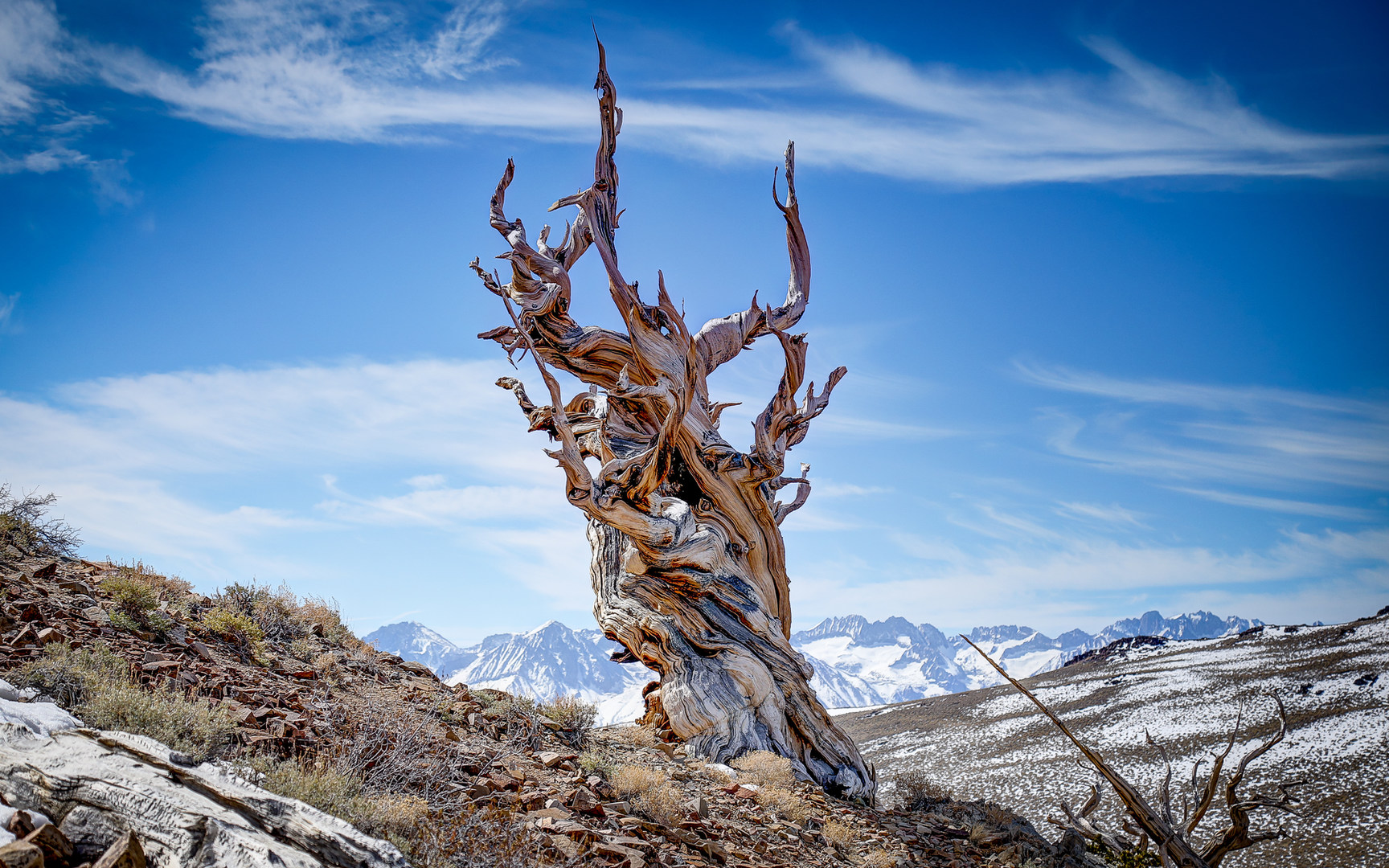 Wallpaper Fall Weather Ancient Bristlecone Pine Forest California