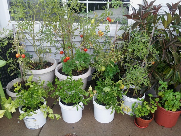 Alternative Gardening Ideas Outdoortheme Com