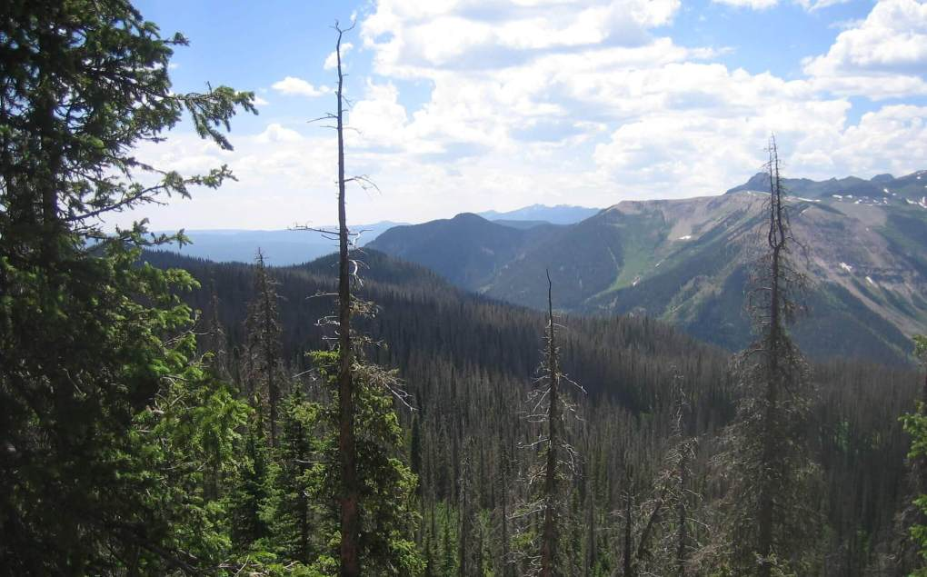 Weminuche Wilderness Near Palisade Meadows cutoff
