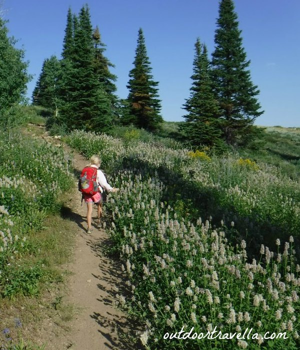 Looking for butterflies in the wildflowers and bear grass.