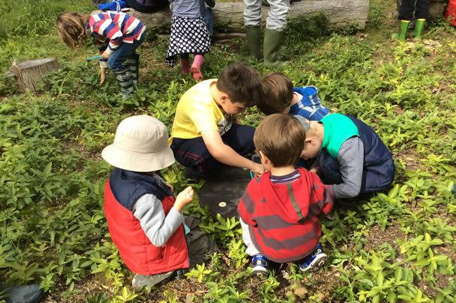five boys kneeling around tree stump