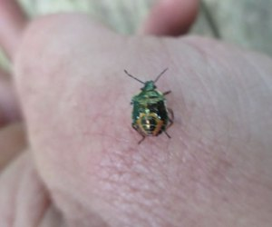 beetle on a hand