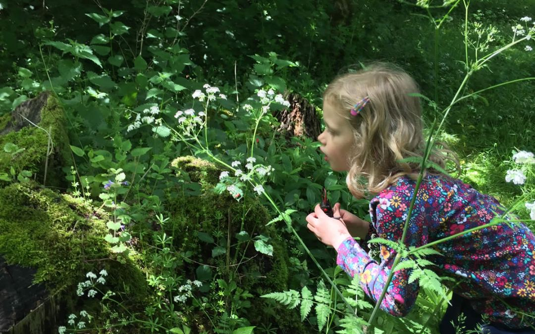 Forest School for home educated children in East Northants