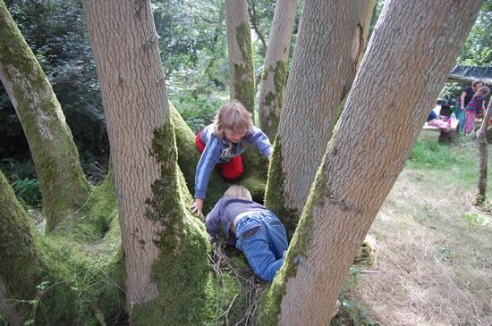 boys exploring tree