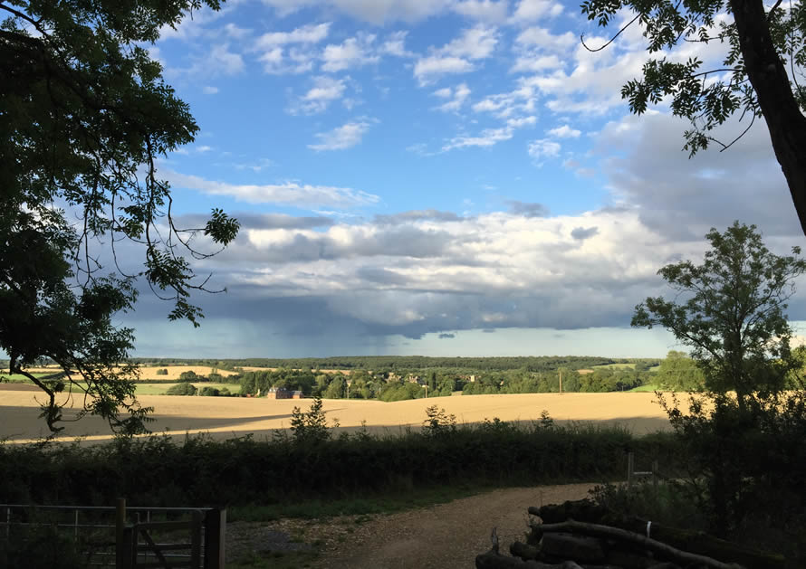 view over fields from wood