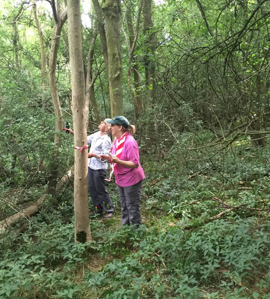 two women looking up a tree