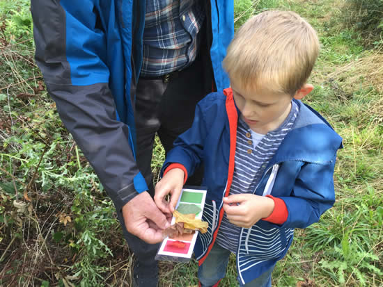 boy comparing leaves to colour card