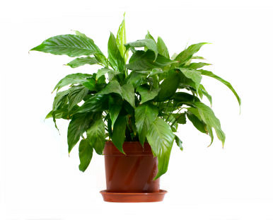 Five reasons your houseplants and how to save them - OUT ... on