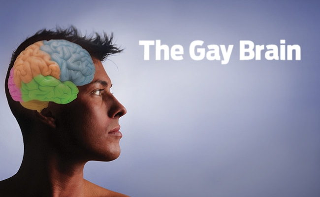 Homosexual heterosexual brain differences