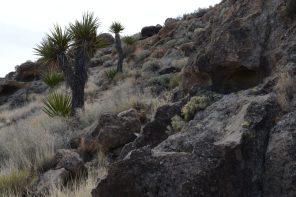 Beautiful Landscape at Mojave Desert