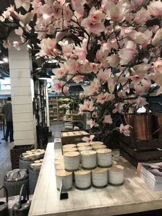 Magnolia tree sets the stage for a shopping adventure
