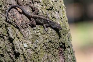 Lizard poses