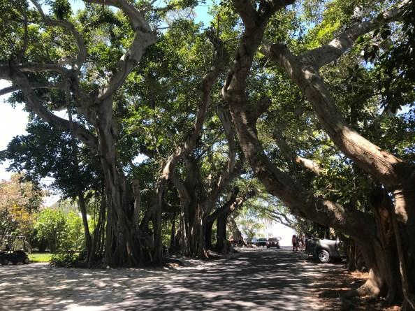 Mangrove Street Boca Grande