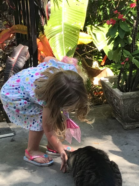 Girl feeds one of over 50 cats that live at at Ernest Hemingway House