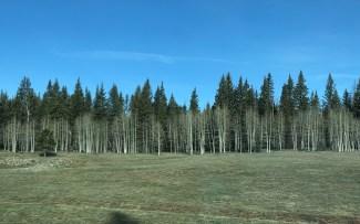 Beautiful line of trees