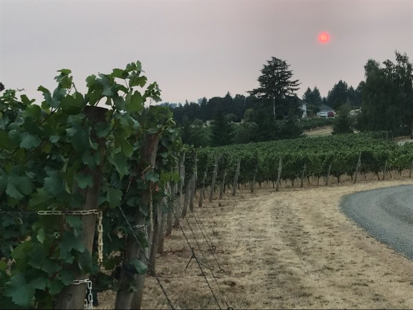 2017 red sun over the vines