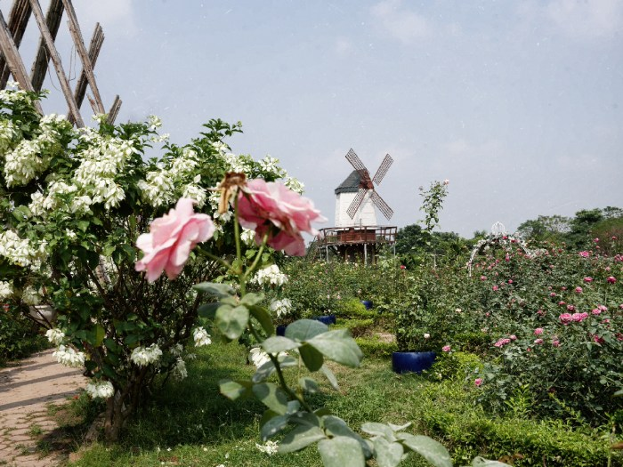 Nhat Tan Flower Garden. More than a pretty instagrammable place in Hanoi |Outlanderly