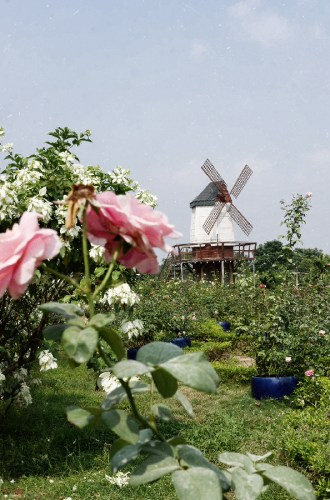Nhat Tan Flower Garden. More than a pretty instagrammable place in Hanoi  Outlanderly
