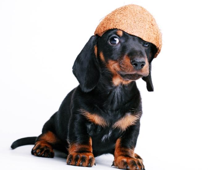 20 Beneficios del Aceite de Coco para Perros