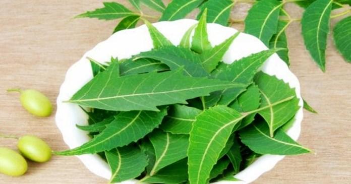 neem has wonderful health benefits