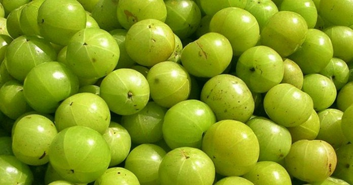 See the benefits of amla eat regularly