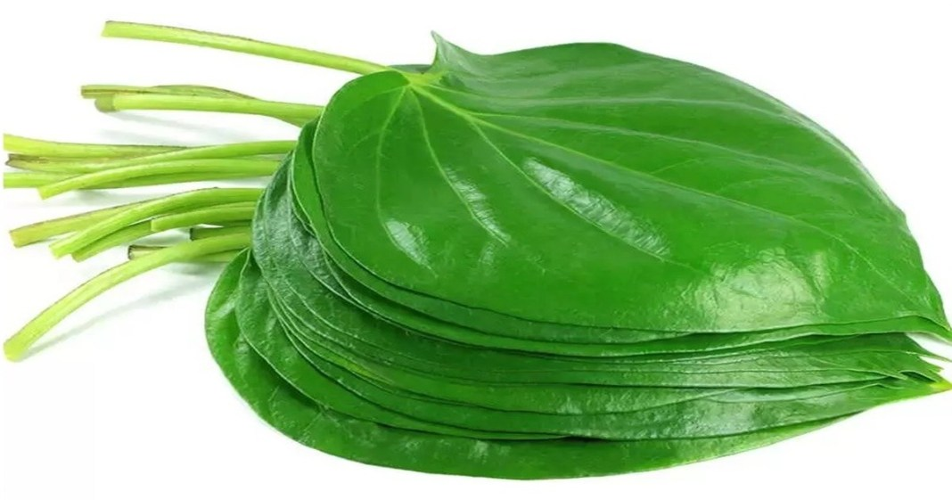 Know the Betel Leaf Best Remedies For Good Lucka