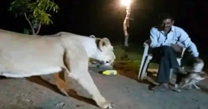 Seven convicted of holding 'illegal lion show' in Gir forest, get up to 3 yrs in jail
