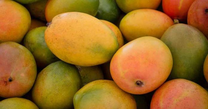 Find out how to recognize good ripe mangoes