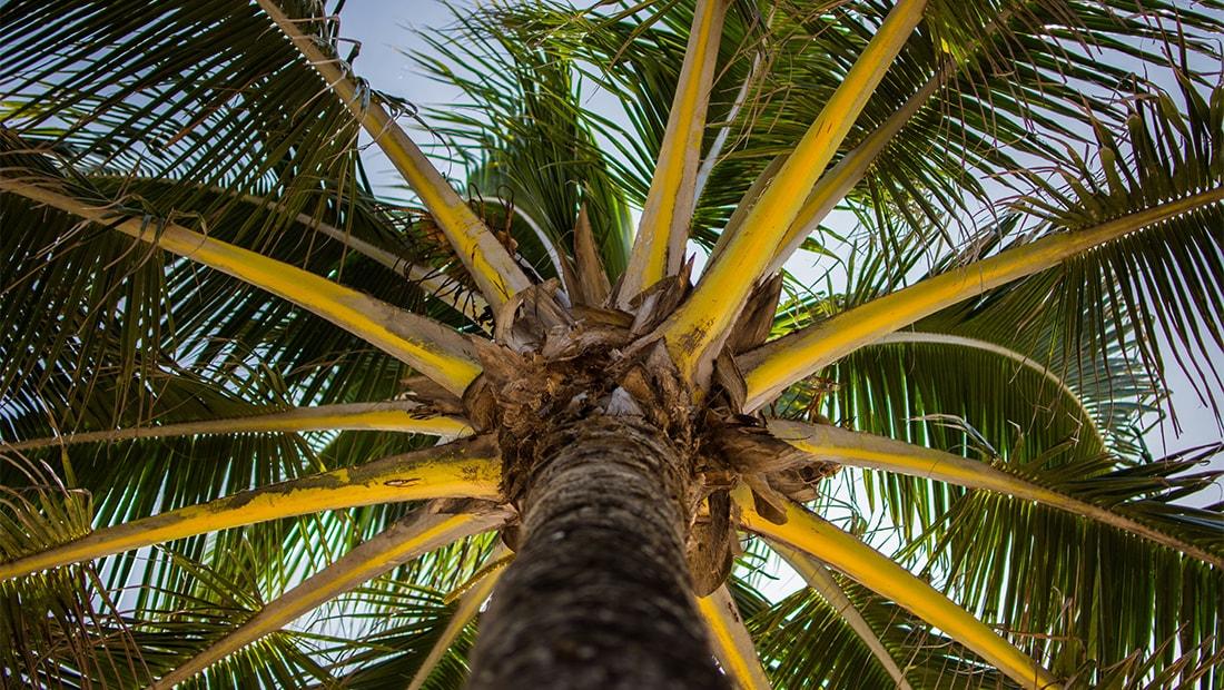 WestJet and WestJet Vacations information regarding the incident at the Grand Riviera Princess in Playa del Carmen