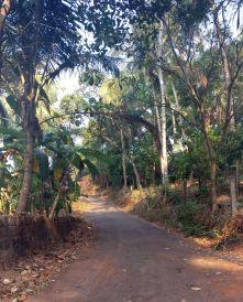 Kizhunna beach, walk to the village