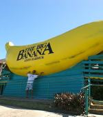 Coffs Harbor Giant Banana