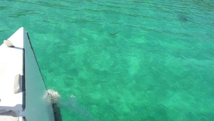 Barco na Jamaica