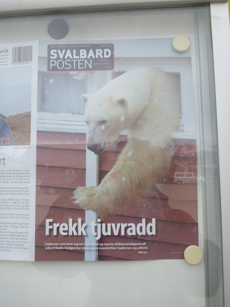 polar bear risk Svalbard Norway longyearbyen