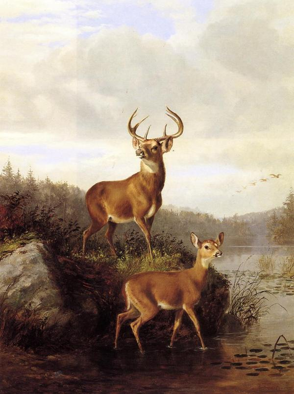 Arthur Fitzwilliam Tait Buck And Doe Ii Oil Painting