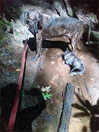 Dogs in Creek