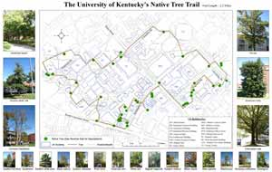 The University of Kentucky's Native Tree Trail