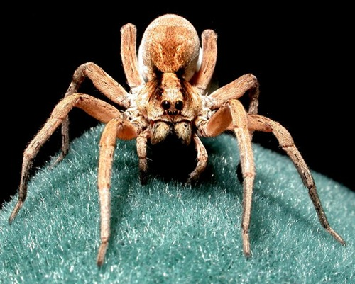 basho�s 5 amazing spider encounters from around the world